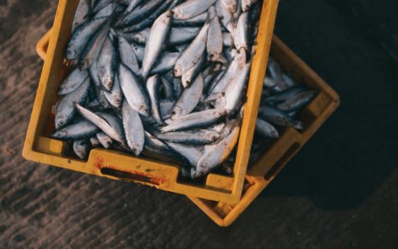 seafood, fish, fraud, fish fraud, food, food fraud, eating, canada, ocean